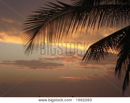 Palm Tree Against Orange Sky