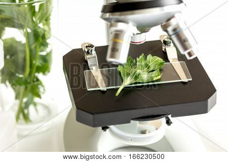 concept - check dietary supplements in laboratory on microscope no one