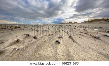 Sea Shells On Wind Swept Beach