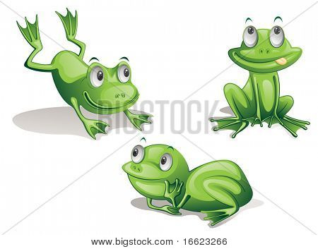 illustration of three frogs on white