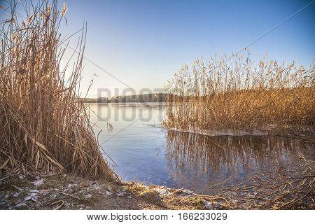 golden cereals on a large blue lake