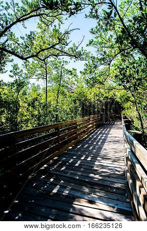 WOODEN WALKWAY OVER WET LAND WITH OVERHANGING TREES AND SHADOWS