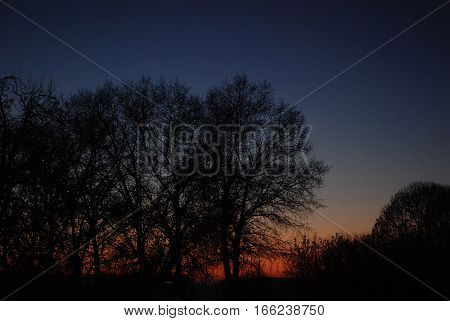 Bare trees on background of night clouds