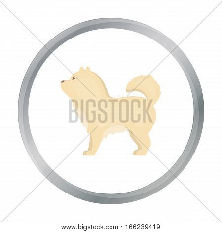 Chow-chow vector illustration icon in cartoon design - stock vector