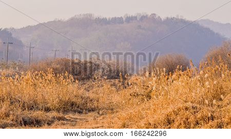 telephone, landscape, rural, telegraph, line, nature, tree, country, electric, power, energy, wooden, natural, outdoor, countryside, poles, meadows, tall, grass, mountain, field, leading, background