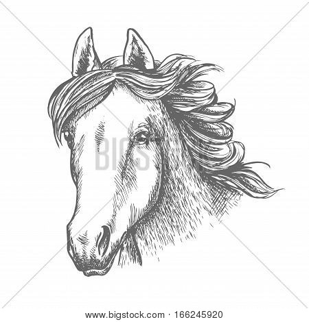 Horse head sketch of arabian mare horse. Isolated racehorse head with alert ears and long flowing mane. Horse racing, equestrian sporting competition, breeding farm design