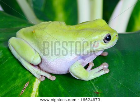 a photo of green frog sitting on tree