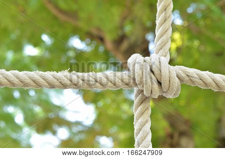 Rope knot line tied together with nature background, as a symbol for trust, teamwork or collaboration.