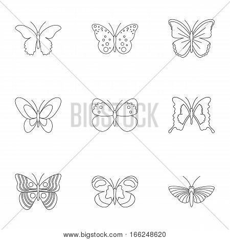 Creatures butterflies icons set. Outline illustration of 9 creatures butterflies vector icons for web