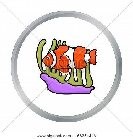Clownfish and anemone icon in cartoon design isolated on white background. Australia symbol stock vector illustration. - stock vector