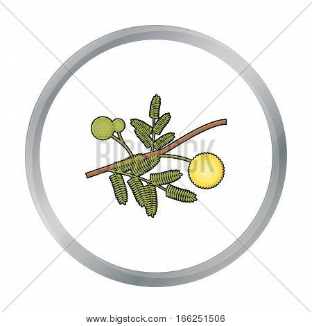 Yellow mimosa flower icon in cartoon design isolated on white background. Australia symbol stock vector illustration. - stock vector