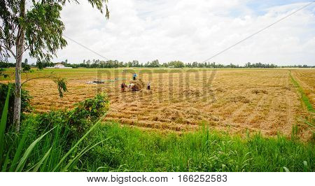 Landscape Of Countryside In Southern Vietnam