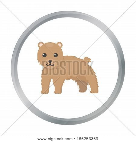 Bear icon cartoon. Singe animal icon from the big animals cartoon. - stock vector