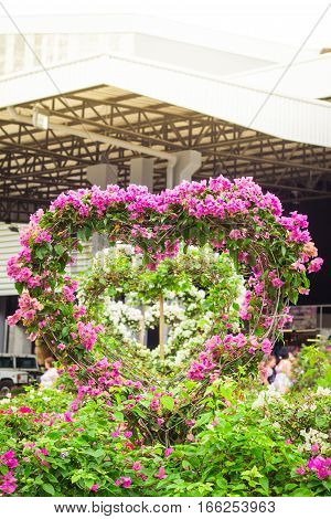 Bougainvillea Tree During Valentine's Day