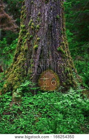 Closeup of ancient tree with fairy door in forest/