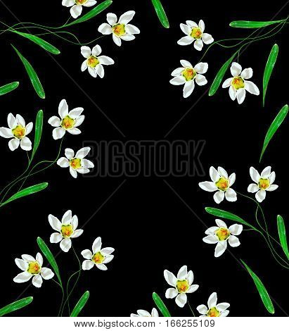 spring flowers snowdrops isolated on black background.