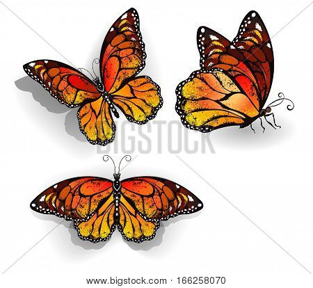 Set of orange realistic isolated monarch butterflies on a white background. Monarch. Design with butterflies.