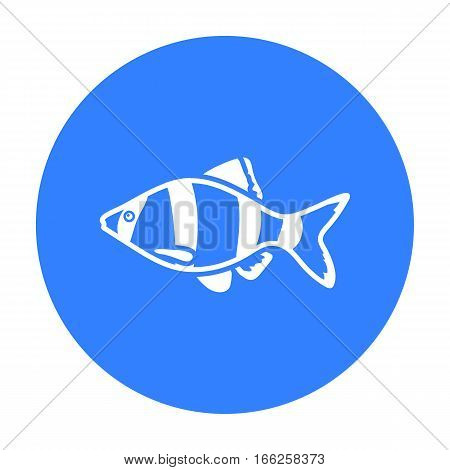 Barbus fish icon blue Singe aquarium fish icon from the sea, ocean life black stock vector