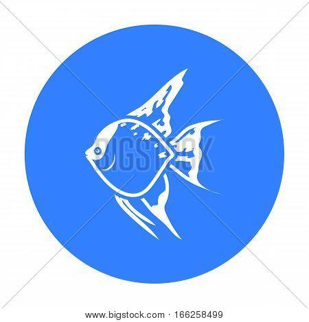 Angelfish common fish icon blue.. Singe aquarium fish icon from the sea, ocean life black.