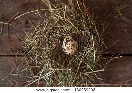 Straw nest with one egg on table flat lay. Top view on dark wooden background with bunch of dry grass and only quail egg in it. Spring, new life, nature concept