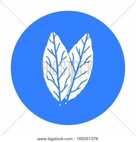 Laurus icon isolated on white background. Herb an spices symbol vector illustration.