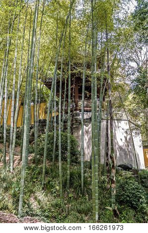 China Hangzhou. Monastery Soul SanctuaryTemple (Lininsy). A wooden gazebo in young bamboo grove in a secluded corner of the park.