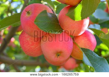 All Seasons Apple Orchard