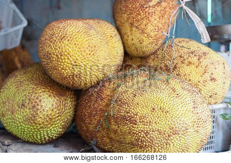 jackfruit agricultural products. jackfruit ready though for groceries. jackfruit are sold in the market