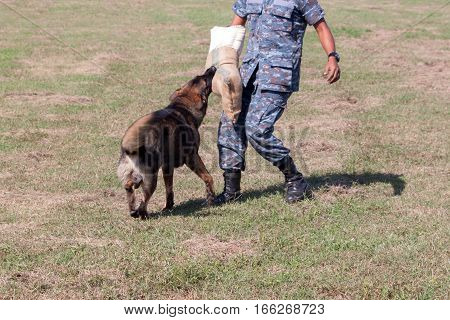 Soldiers from the K-9 dog unit works with his partner to apprehend a bad guy during a demonstration