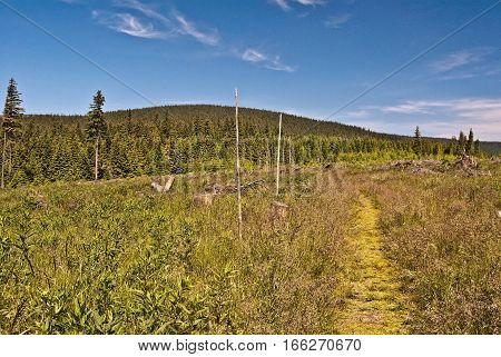 mountain meadow with hiking trail, Temna hill on the background and blue sky in summer Jeseniky mountains in Czech republic