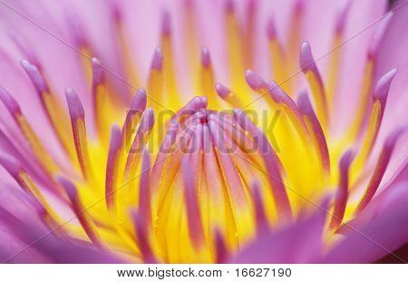 a closeup shot of flower