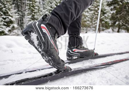 Cross-country skiing in winter forest. Active people