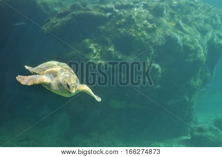 Sea Yellow Turtle Aquarium view inside a Turtles hospital in Reunion Island