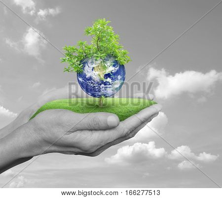 Planet and tree in human hands over black and white sky with white clouds Save the earth concept Elements of this image furnished by NASA