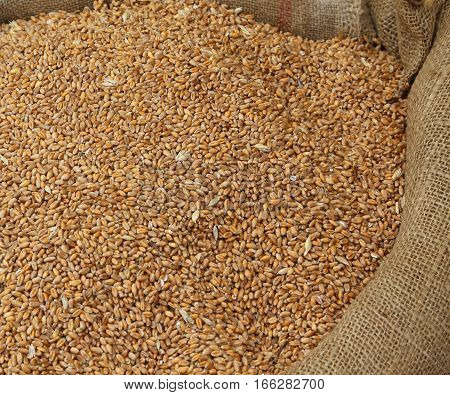 Ripe Wheat Seeds For Sale To The Cereals And Grain Market
