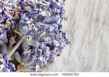 the Dried purple flowers lavender macro shot