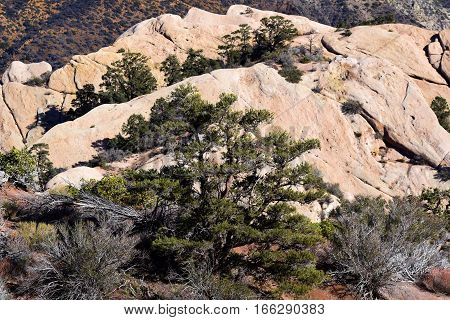 Pine forest surrounding rocks which are being uplifted from geological activity taken on the San Andreas Fault at Devils Punchbowl Preserve in the San Gabriel Mountains, CA