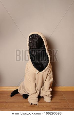 dog, labrador, puppy, dog sweater, pet, favorite pet, animal, black, jacket, hood, hooded dog