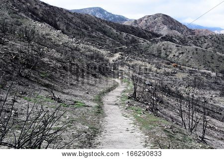 Hiking trail through a charcoaled landscape with burnt chaparral shrubs caused from a wildfire taken in the Cajon Pass, CA
