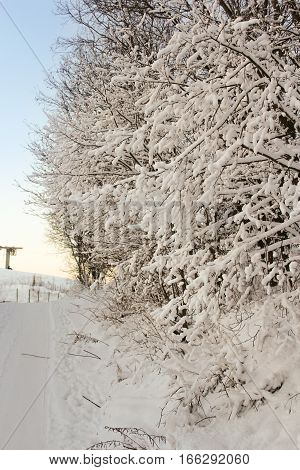 Frosted tree branches. Winter night scenery and countryside views of the sunset.