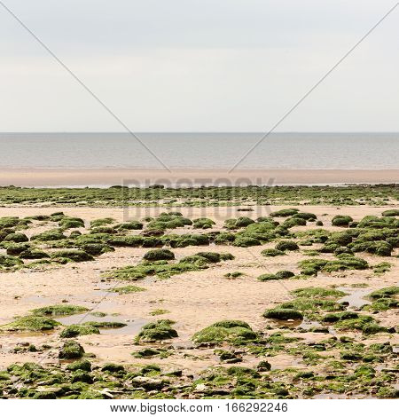 A view of the East Anglia UK coastline beach with eroded rockes covered in seaweed littering the sandy beach visible only when the tide is out.