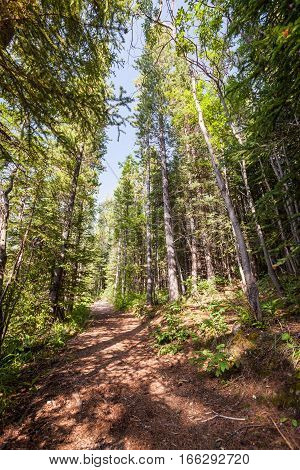 A view within the forests of Banff National Park Alberta Canada on a bright and sunny summer's day.