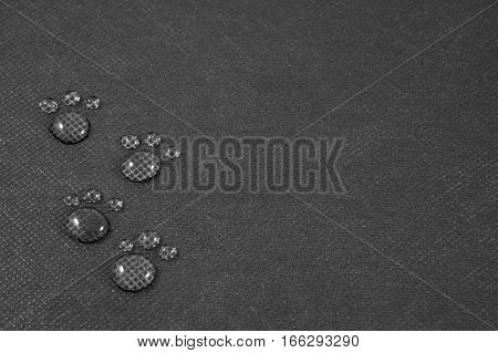 Four small animalistic footprints on black background