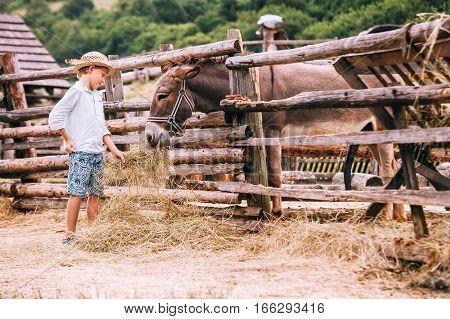 Boy feeds a donkey on farm .
