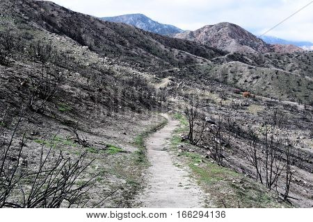 Hiking Trail through a charcoaled landscape caused from a wildfire with burnt chaparral plants taken in the Cajon Pass, CA