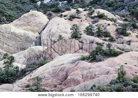 Pine Forest surrounding rocks which were lifted upward taken on the San Andreas Fault at the Devils Punchbowl in the San Gabriel Mountains, CA