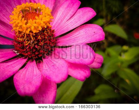 Flower pink brighten Pollen attracts insects Ploenta nature