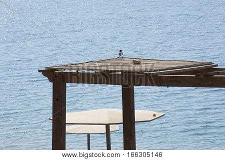 bird Amman beach in Dead Sea, resort afternoon, tent, pavilion, awning