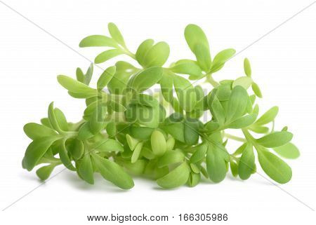 cress bunch isolated on a white background