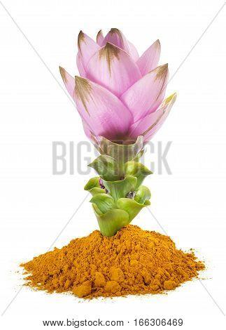 Curcuma Flower And  Powder